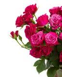 Groupe de roses mauve fraîches images stock