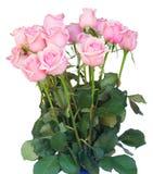 Groupe de roses roses fraîches photographie stock libre de droits