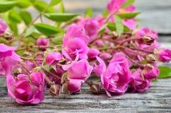 Groupe de roses roses sur un fond en bois Photo stock