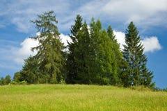Groupe de sapins contre le ciel nuageux bleu Photos stock