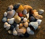 Groupe de seashells sur la plage photo stock
