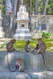 Groupe de singes au temple de Ku Phra Kona en province de Roi Et, Thaïlande du nord-est Image stock