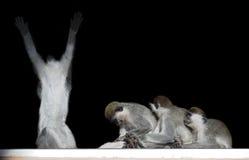Groupe de singes se reposant dans une rangée près de l'un l'autre comme l'esclave Images libres de droits