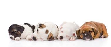 Groupe de sommeil de chiots D'isolement sur le fond blanc Photo libre de droits