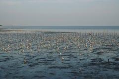Groupe de support d'oiseaux sur la surface de l'eau Images libres de droits