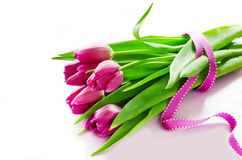 Groupe de texte rose témoin de tulipes de ressort Image libre de droits
