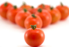 Groupe de tomate Photographie stock libre de droits