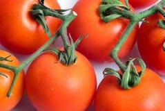 Groupe de tomate mûre sur un fond blanc Photographie stock libre de droits