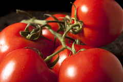 Groupe de tomates photos stock