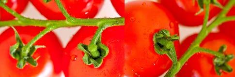 Groupe de tomates-cerises photo libre de droits