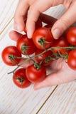 Groupe de tomates-cerises mûres rouges à disposition photo stock