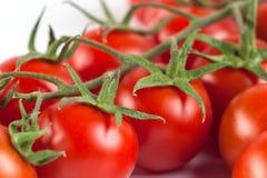 Groupe de tomates fraîches savoureuses rouges sur le fond blanc Images libres de droits