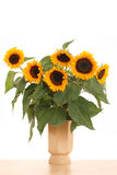 Groupe de tournesols Photographie stock