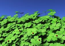 Groupe de trèfles à quatre feuilles avec des coccinelles Image libre de droits