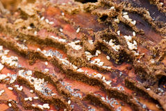 Groupe de travail de fourmis. Images libres de droits