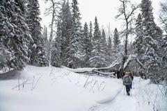 Groupe de trekkers marchant sur la traînée de neige dans la forêt d'hiver Photos stock
