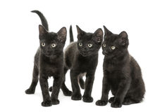 Groupe de trois chatons noirs regardant dans la même direction Image libre de droits