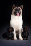 Groupe de trois chiens Image stock