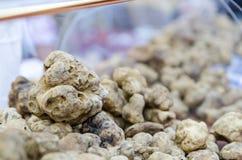 Groupe de truffes blanches d'alba, Italie photo stock