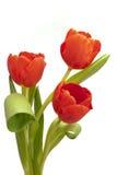 Groupe de tulipe de Pâques Photo stock