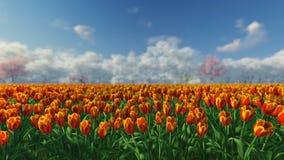Groupe de tulipes à la lumière du soleil contre le ciel bleu banque de vidéos