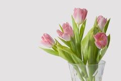 Groupe de tulipes Photo stock
