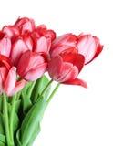 Groupe de tulipes Images stock