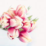 Groupe de tulipes image libre de droits