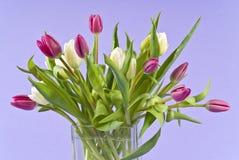 Groupe de tulipes dans un vase en verre image stock