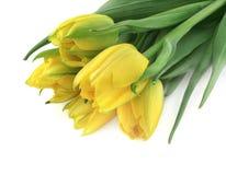 Groupe de tulipes jaunes Photo stock