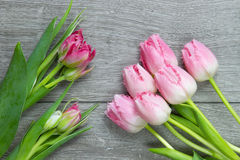 Groupe de tulipes roses molles Image stock