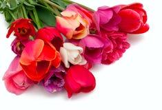 Groupe de tulipes rouges et roses au-dessus de blanc Photographie stock