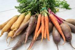 Groupe de variétés organiques de carotte d'héritage de pourpre, orange photographie stock libre de droits