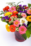 Groupe de zinnias Images stock