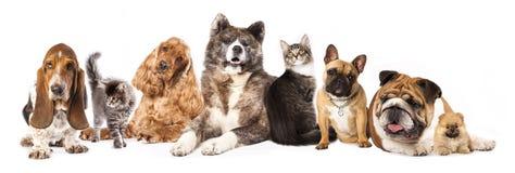 Groupe des chiens et du chat Photographie stock libre de droits