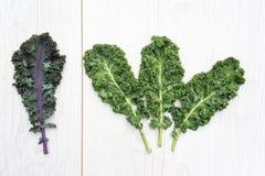 Groupe des feuilles vertes de chou frisé et d'une feuille de chou frisé rouge photos libres de droits