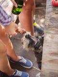 Groupe des jeunes s'asseyant à la table dehors Ils apprécient pour causer et boire des bières Image stock