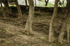 Groupe des troncs de quelques arbres entourés par la terre et les feuilles sèches images libres de droits
