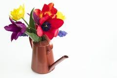 Groupe des tulipes colorées et du muscari placés sur une boîte d'arrosage Photographie stock