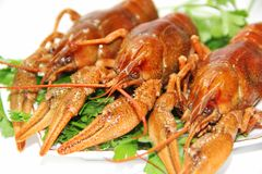 Groupe dos crawfishes imagens de stock