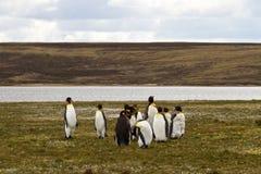Groupe du Roi Penguins Photographie stock libre de droits