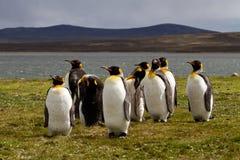 Groupe du Roi Penguins Images libres de droits