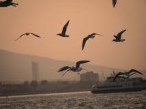 Groupe du vol d'oiseau de mouette par la mer Photo stock