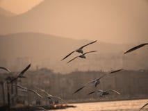 Groupe du vol d'oiseau de mouette par la mer Photo libre de droits