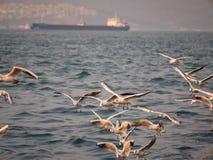 Groupe du vol d'oiseau de mouette par la mer Images libres de droits