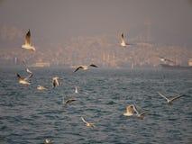 Groupe du vol d'oiseau de mouette par la mer Photos stock