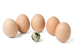 Groupe eggs Royalty Free Stock Image