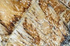 Groupe en bois de texture image libre de droits