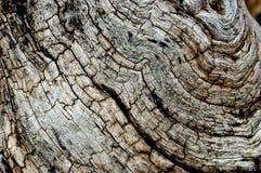 Groupe en bois mort Photographie stock libre de droits