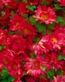 Groupe faux de chrysanthemums Photo stock